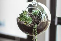 Plants, Terrariums and Cacti