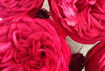 Blumenliebhaber/-in