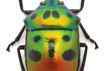 Nature | Beatles & Other Insects / Beautiful little creatures