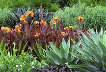 tropical garden inspo