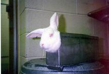 BOYCOTT COMPANIES THAT TEST ON ANIMALS