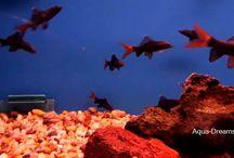 Aqua Dreams Aquarium Videos