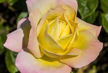 Flori/Floweres