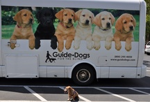 Guide Dogs for the Blind / by Makiko Flaherty