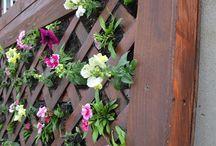 Gardening - Flowers & Groundcover