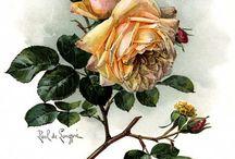 Roses / Розы цветы.