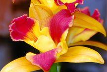 Botanical / Tropical, lush, foliage, vibrant, colourful