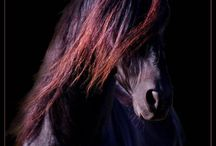 Horses / by Valerie Derouin
