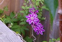 The Garden 2012 / My 2012 garden journal...