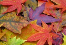 Herfst kleurtjes