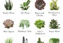 plants and garden