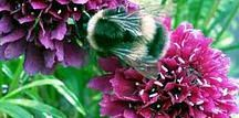 Bee Nice ! / Plants that the bees will love ! Encourage the wee beasties to your garden and benefit from one of the many beneficial garden pollinators. A handy floral supplement to the bee keeper.