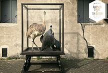 Display Cabinet with Birds