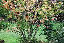Le Jardin de La Pellerine en Mayenne (53) / Un 'Jardin Remarquable'* à l'automne, raconté par Georges Lévêque !
