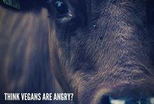 Vegan relatable