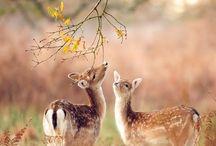 Természet +állatok