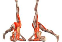 Visual Muscles Yoga Stretching