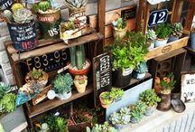 多肉植物 ガーデンレイアウト