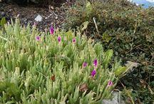 Alpine garden / Ideas and pictures of my alpine garden. I'm not an avid gardener but I like to nurture. Chalet Leman's garden is at 1450m