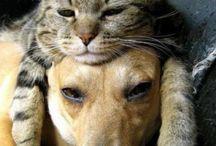 Kochane zwierzaki
