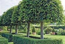 Standard trees