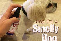 Dog oils