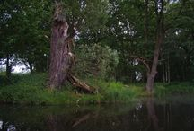 """Dahme-Spree-Rundfahrt (Märkische Umfahrt) / Die """"Große Märkische Umfahrt"""" ist eine sehr abwechlungsreiche Kanureise als optimale Rundtour für Wasserwanderer. Sie ist etwa 185 Kilometer lang und kann zwischen 8 und 11 Tagen dauern. Abstecher in andere Seen und Kanäle sind sehr lohnend, man kann auch gut und gerne einen kompletten Jahresurlaub im """"Dahme-Spree-Seengebiet"""" verpaddeln. Es ist auch möglich, kleine Abstecher zum Spreewald zu unternehmen."""