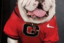 Georgia Bulldogs / by Melissa Chubner