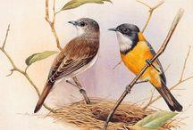 Eric Shepherd птицы