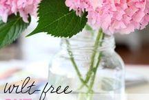 Gardening: Flowers and Blooms / Flowers, shrubs, roses, hydrangeas, zinnias, azaleas, care