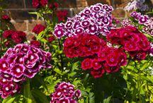 Blumen Juni