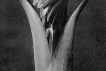 iLike - Karl Blossfeldt / Karl Blossfeldt (1865 – 1932) was a German photographer, sculptor, teacher and artist who worked in Berlin, Germany. He is best known for his close-up photographs of plants and living things, published in 1929 as Urformen der Kunst. He was inspired, as was his father, by nature and the way in which plants grow. He believed that 'the plant must be valued as a totally artistic and architectural structure.'
