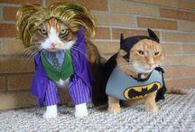 cat cat cat power / funky cats