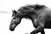 Equine / Equine Photography