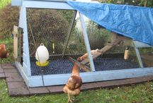Rubber Chippings for Chickens / Our rubber chippings are a very hygienic surface for your chickens, they do not absorb moisture so any mess that does land on them, dries quickly which is much more pleasant for the chickens.