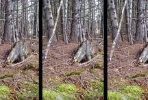 Natur und Wald