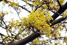 Flora | Blooming trees