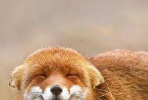 Schöne Tier Bilder und Sprüche