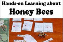 Duben / zvířata a jejich mláďata  vývoj motýla / na kytičce včelku vidím (vývoj včely a včelí produkty)