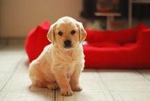 Cutest little creatures! / by Dora New
