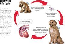 Pets & Parasites