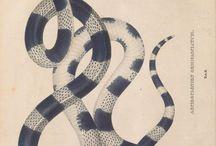 tats refs snake