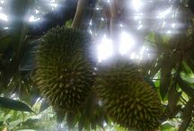 Fruits From Nature / Life From Natural