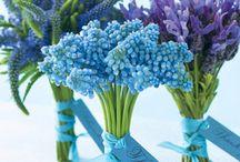 Flowers / by Denise Calhoun