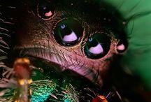 Macrobug / by charley mccoy