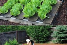 Odling o trädgård
