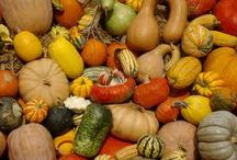 Pumpkins and squash / We believe in making vegetables the hero and we love the way these photographs celebrate pumpkins, squash and the great stuff that can be made from them.