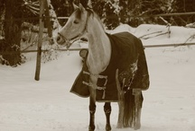 journée de neige du 20 Janvier 2013 / détente des poneys un jour de neige