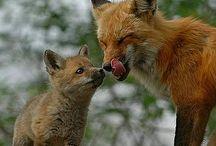 Fotos bonitas de animales / by rosa ojeda treviño
