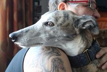 Greyhound / I never want to own another pet again in my live they're just so amazing